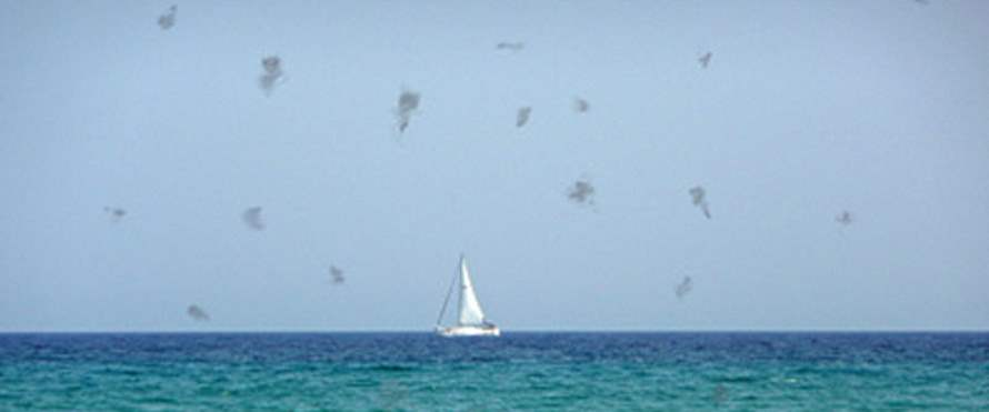 moscas_volantes_1